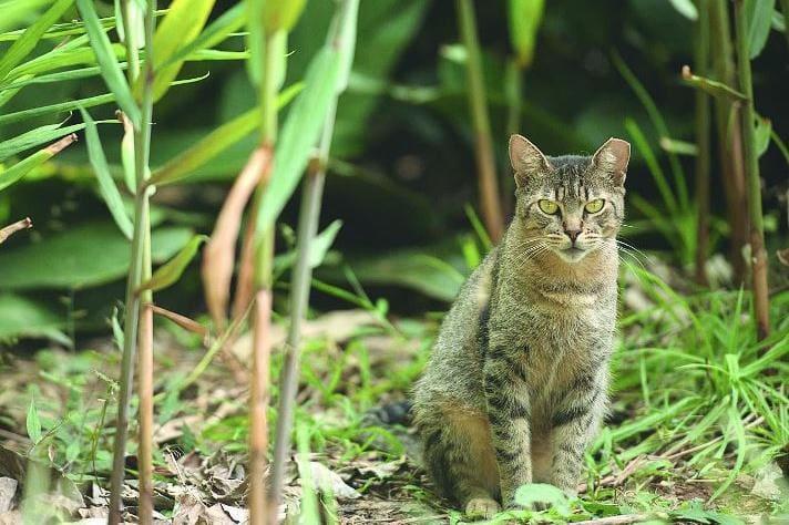 cb106d7b2 Austrália declara guerra aos gatos e quer matar dois milhões até ...