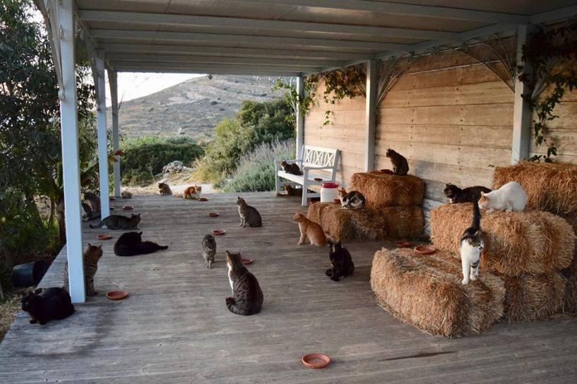 d82f1ab3231a Abrigo para gatos em ilha paradisíaca na Grécia abre vaga de emprego ...