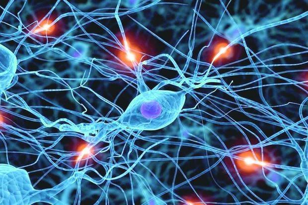 Enfrentar ou fugir: a serotonina nos ajuda a tomar a decisão certa ...