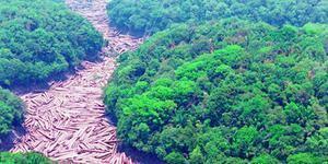 Brasil foi responsável por 1/3 da perda de florestas virgens no mundo em 2019