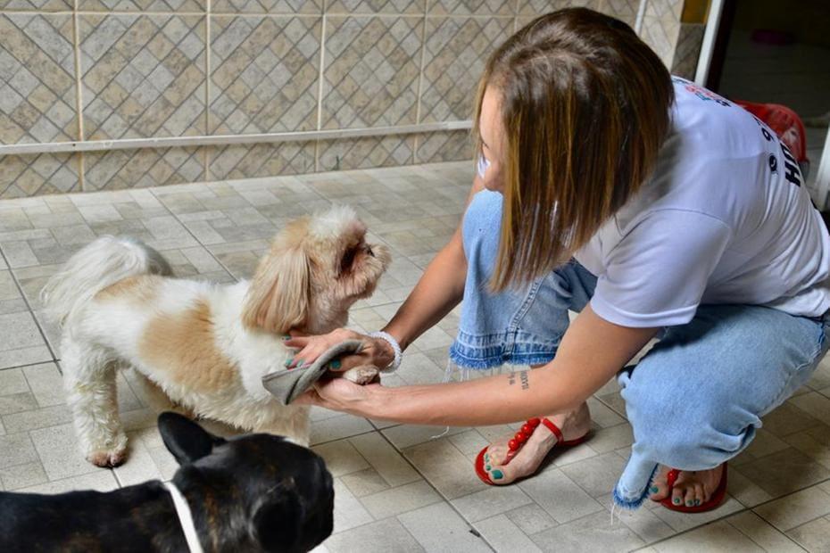 Alessandra Correia tem um hotelzinho para cachorros e adota cuidados básicos com os animais desde o início da pandemia do coronavírus