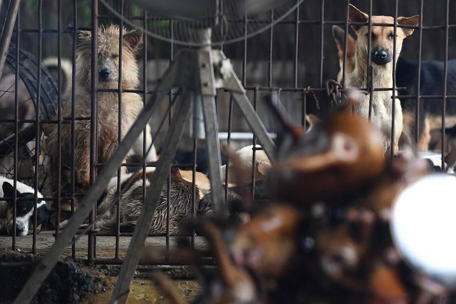 Casal é preso por envenenar animais para vender carne