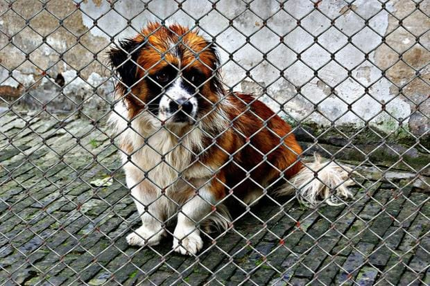 Coreia do Norte confisca cães de estimação; donos temem venda para restaurantes