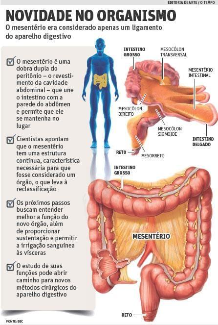 Novo órgão Pode Ajudar A Entender Doenças Digestivas O Tempo