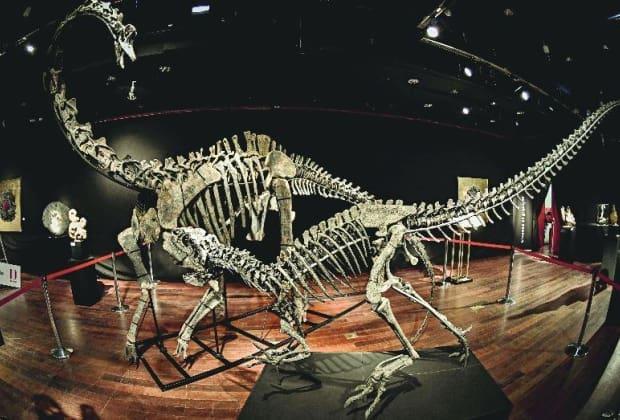 Colecionador Compra Dois Fosseis De Dinossauros Por R 6 Milhoes