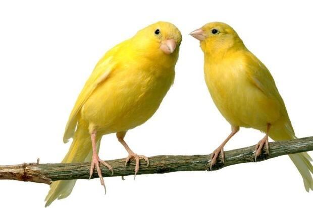 Pássaros Podem Ser Bons Amigos