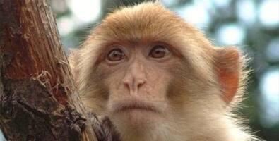 f7f5fc4460 Pesquisadores brasileiros vão testar vacina contra a Aids em macacos neste  ano